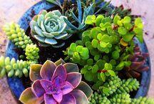 Gardening & Plants / Bitkiler | Çiçekler | Bahçe