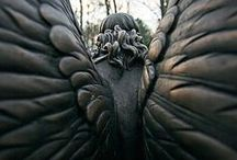 Wings / by Beth Parsons