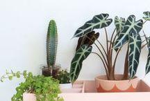 Indoor plants to love / Un amour de plante / #plants #green #decor #garden #indoor