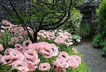 Garden / plants / gardening tips
