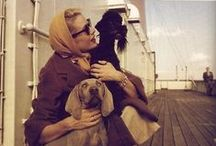 Travel with Dogs + Wild Ride! traveling with pets / Traveling with Pets...