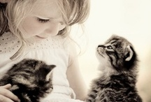 Kittens / All the cute kittens we want to squeeze and kiss.
