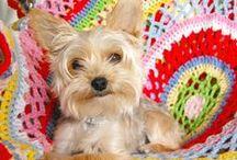 DIY : Crochet / by Carol Kaylor