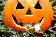 Autumn and Halloween / Crunchy leaves, black cats, pumpkins and orange moons.
