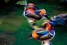 Birds / by Ernane Batista