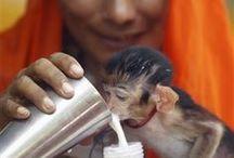 Monkeys so CUTE