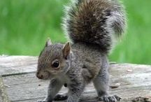 Squirrels ... love them / Adorable creatures - three comes to my garden every day!