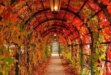 Autumn / by Kelly Elizabeth