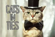 Dapper Cats / Cuties in ties and various accoutrements...