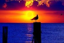 Photos - Sunrise, Sunset / by Sheila Barfield