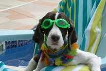 Puppy Love / My fur-babies are gone, but not forgotten. The board cover pic is of one of my dogs, Scout, hanging by the pool. After having dogs my whole life, it's been a big adjustment to not having any. Makes me appreciate everyone else's pups, though! This board is for anything dogs. / by Christi Flynn