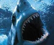 SHARKS / http://greatblogresults.com/