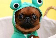 ANIMALITOS / Cuteness