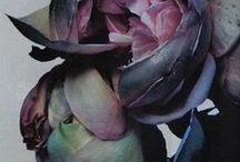 _Indigo/Violet / by Hanah Ho