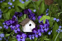 birdhouses / by Annetta Gregory