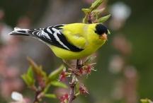 birds / by Annetta Gregory