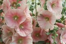 flowers / by Annetta Gregory