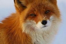 Foxes / by Montaine Bronner