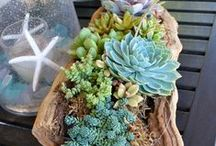 Succulent Ideas - LOVE / DIY How To plant succulents - DIY succulent gifts - succulent ideas - gorgeous succulents - plant succulents - all thing succulents - home decor with succulents  / by Lillian Hope Designs