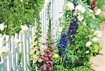 patio porch and garden / by April B