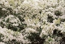 N A T U R E | flowers