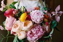 Bloom / by Anaruth Reyes