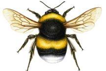 Bee Humble / by Lisa
