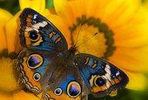 Mariposas impresionantes