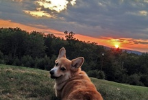 My love for corgis / by Donna Mellendick