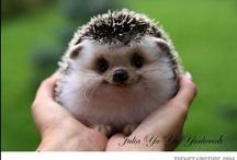 Too Cute! / by Francesca Kanyzová