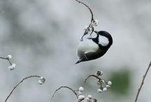 E fu per sempre libero / Birds