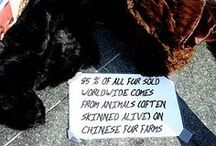 Don't Wear Dead Animals / by Ecolissa