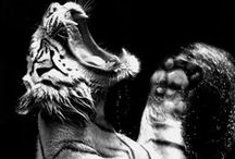Spirit | The Tiger Brand (Rebellious, Strong, Thrill Seeking.) / Moodboard for the Tiger Brand.