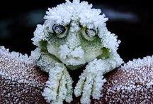 Se una notte d'inverno... / Winter, Inverno