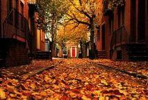 Scricchiolio di foglie... ad ogni passo / Autunno