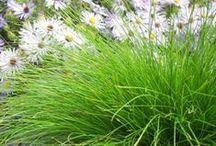 Spectacular Sedges / Highlighting one of our favorite genera... Carex!