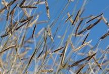 Fall & Winter Interest / Think your garden is destined to be boring all winter? No way! Try some of these perennials and grasses to provide interest and texture during those cold, gray months.