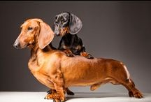 Puppies :) and other animals  / by Christina Taylor