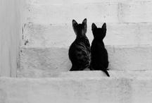 Animals / by Tierlantijn