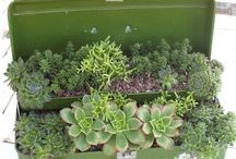 Window Box And Container Gardening