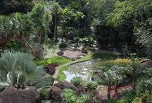 How Does your Garden Grow? / From big botanical gardens to small potted succulents gardens are all around us. The Jewish Museum celebrates gardens in an upcoming exhibition about the modern Brazilian landscape architect, Roberto Burle Marx!  / by The Jewish Museum