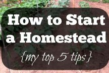 Homesteading for Beginners / New to homesteading? Check this board for tips, tricks and hacks!