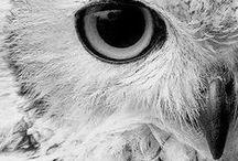 { Owls }