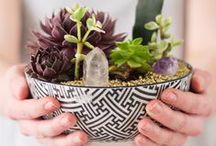 {plants&gardens} / All about plants and gardens, including tips and DIYs.