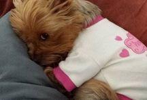 Perritos / Fotos de perritos lindos