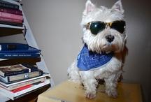 Doggies / by Lyndsey Miller Burton