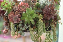 Succulents & Cactus / by The Enchanted Muse