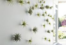 Office Design / by Rebecca Healy