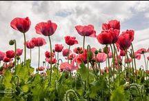Flowers / by Vikylia Sapiente