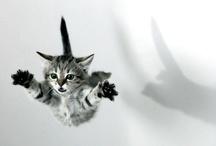 12.such cute pets / by NinelMagic TattooArt